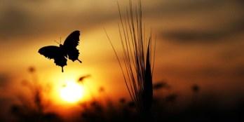 butterflyt